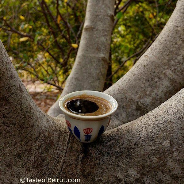 Can you think of a better spot than nudged in a fig tree to sip coffee and... (Dayr Al Qamar, Mont-Liban, Lebanon)