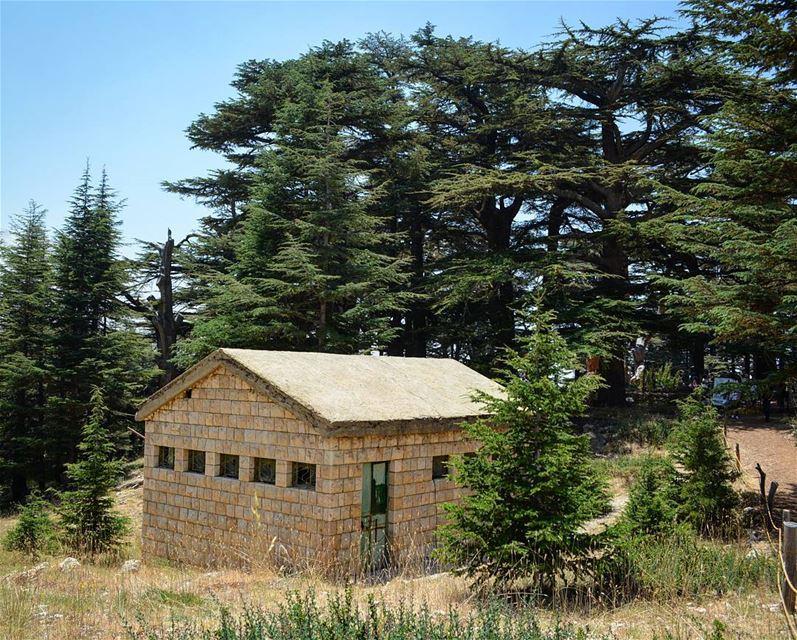 Feels like home... loves_lebanon super_lebanon ig_lebanon ... (Cedars of God)