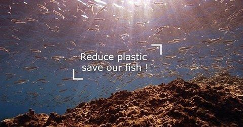 Back in 1997 a study found that 30% of all fish caught along the Lebanese...