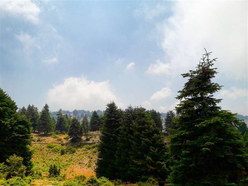 Miles and miles of constant beauty 🌲💚 ...... travel travelgram ... (Al Qubayyat, Liban-Nord, Lebanon)