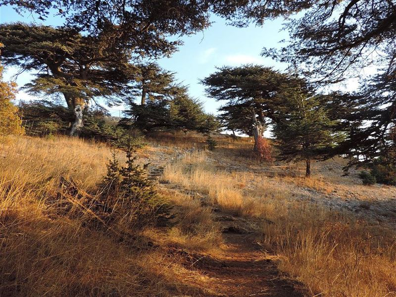 ... nature naturelovers landscape landscapephotography photography... (Maaser El Shouf Cedars)