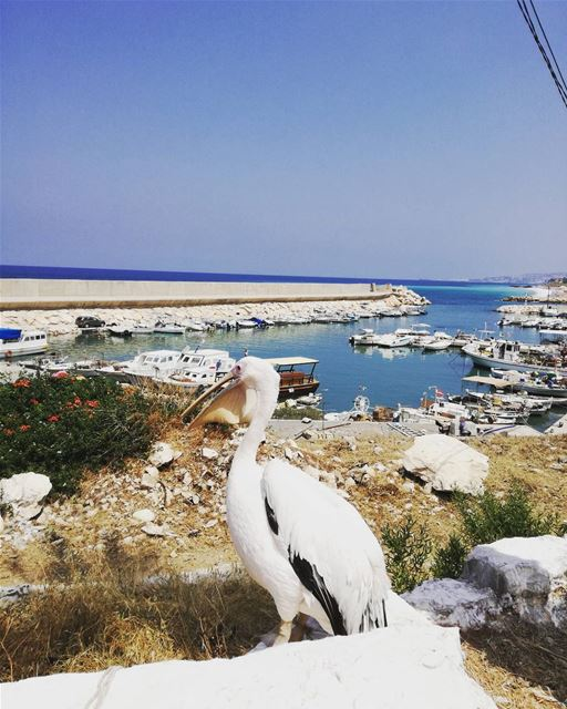Hello you 👋⛵ pelican port boat lebanon beirut jounieh beach sea ... (Byblos - Jbeil)