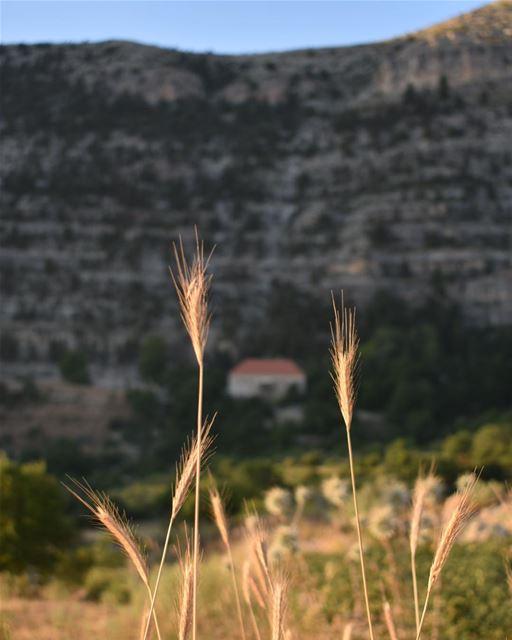 يا ليل إهدنيا حلوضلّك معيبحطّك بقلبيوين ما حلّيت ويا هالدّنيصوتي اسمع (Ehden, Lebanon)