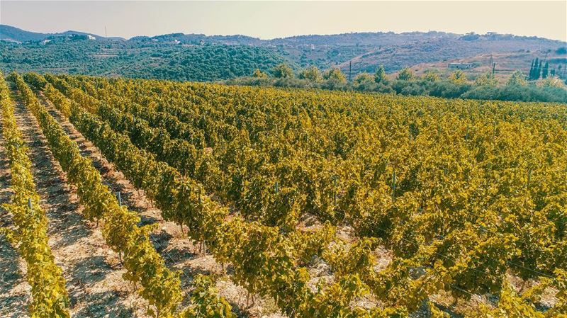 A Great Morning from a Drone's lens over @ixsirwine winery farms summer ... (Ixir Winery)
