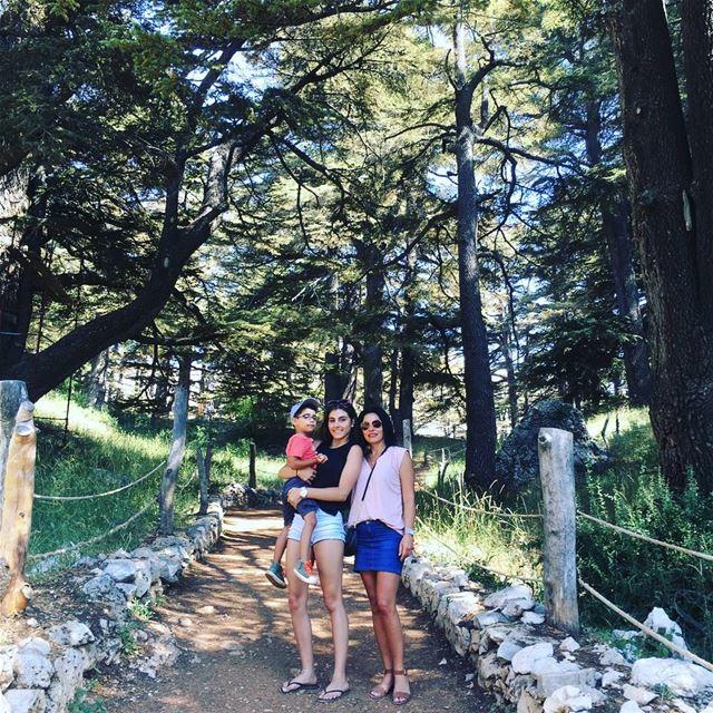 lebanoncedars cedarsofgod forest arz worldheritagesite tourist ... (Cedars of God)