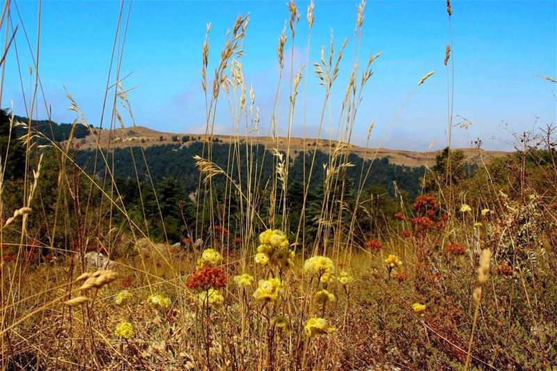 تنورين (📸 لبنان 24). . . Lebanon summer nature tannourine colors ...