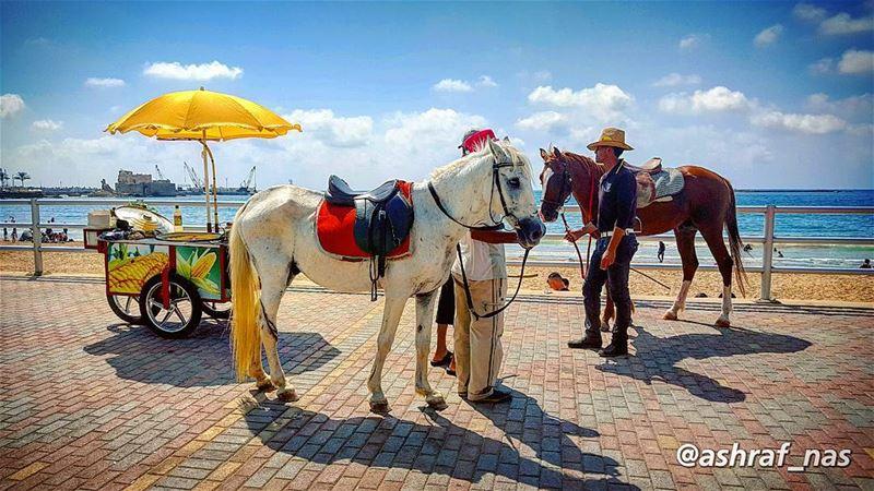 رايتك منصوبة والدهب ميزانكاعملني لعوبة واحملني ع حصانك...وبالساحة الكبيرة (Saïda, Al Janub, Lebanon)