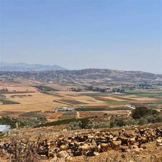 Good morning from klayaa insta_lebanon instagramers ig_lebanon ... (El Qlaïaâ, Al Janub, Lebanon)