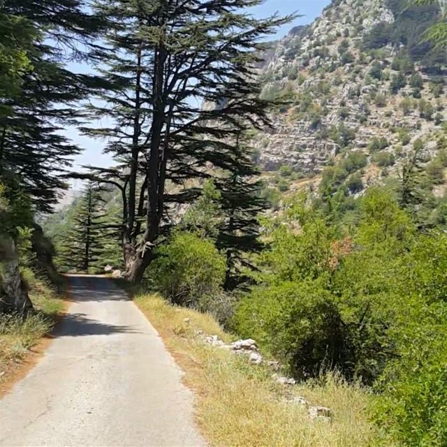 When in the mountains ... naturelovers nature cedruslibani cedars ...
