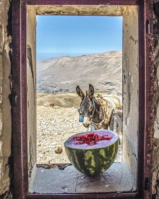 Simplicity ♥️................. Lebanon livlovelebanon ... (Lebanon)