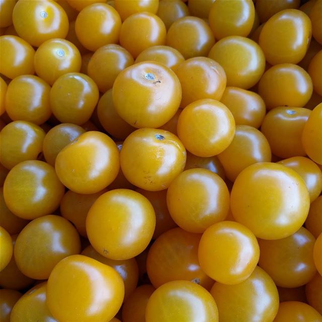 tomato tomatos fresh yellowtomatos yellow tastyfood food ...