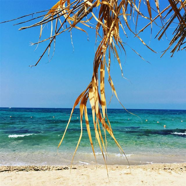 The Witch's Broom. beach sun nature water ocean lake instagood ... (Eleven_Bay)