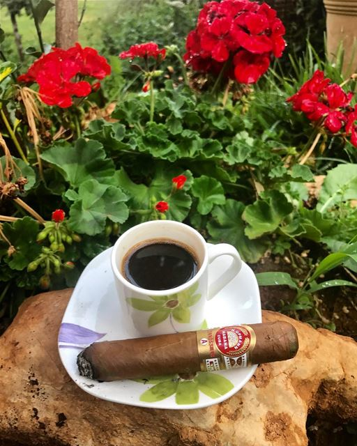 Good 😊 morning.😃 morning wearher summer flowers cup turkishcoffee cigar... (Zahlé District)