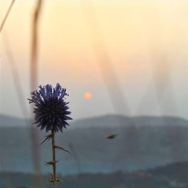 nikontop_ nikonworld bns_sky bns_sunset naturelovers unlimitedsunset... (Bmahray, Mont-Liban, Lebanon)