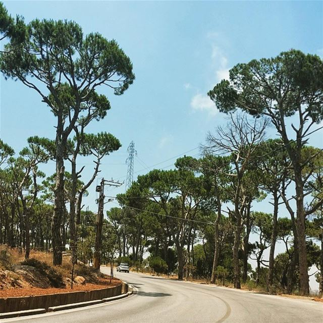 Lebanon. tree pine road nature green photooftheday photographer... (Lebanon)