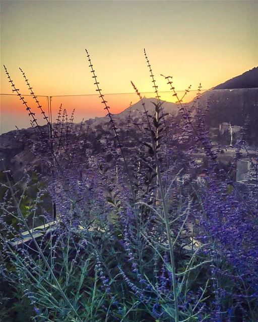 A lavender scented sunset from  Ehden 💜... (Ehden, Lebanon)