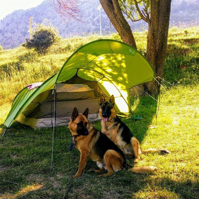 camping campinglebanon hiking camping campinglebanon germanshepherd ... (Mount Lebanon)
