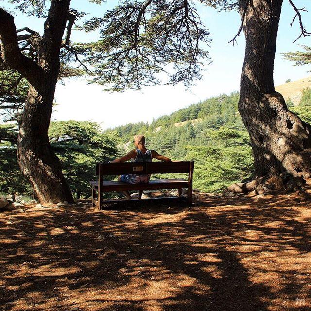 -Morning therapy🌲💚- ... ptk_lebanon amazinglebanon lebanon_hdr ... (Al Shouf Cedar Nature Reserve)