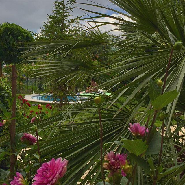 Zen attitude 🌷 whatsuplebanon livelovelebanon livelovebeirut pool...