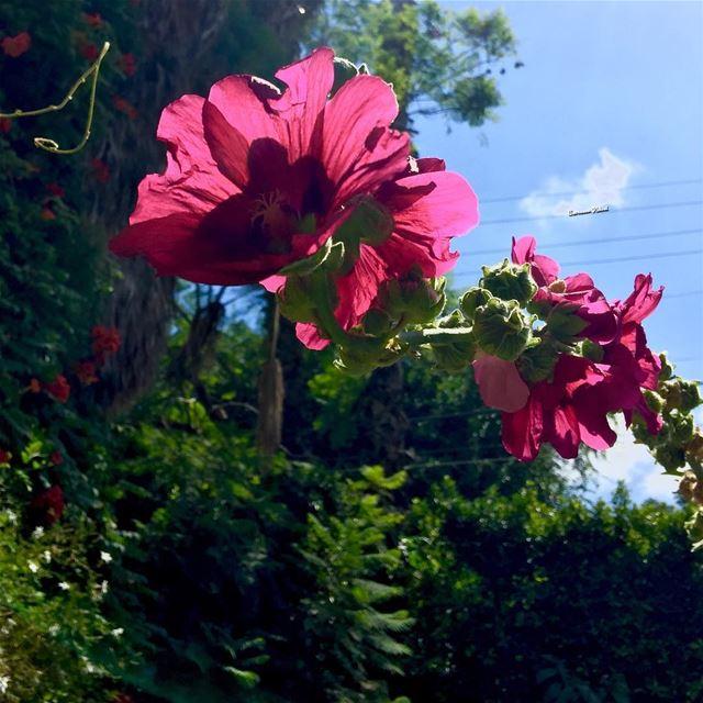 my garden colors flowers ...