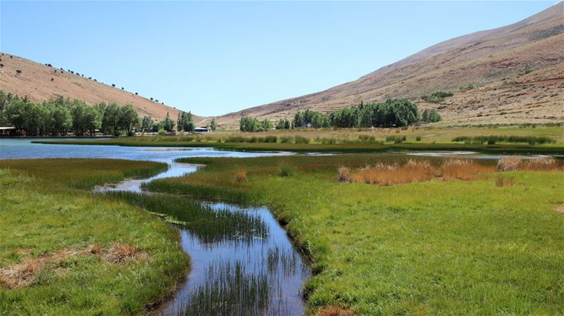 Our View at Lunch gorgeous  wetlands  oyounorghosh  bekaa  lebanon ... (Oyoun oreghoch)