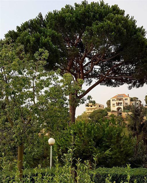 Lebanon with love. lebanon broumana nature tree houses green summer cloud... (Broumna)