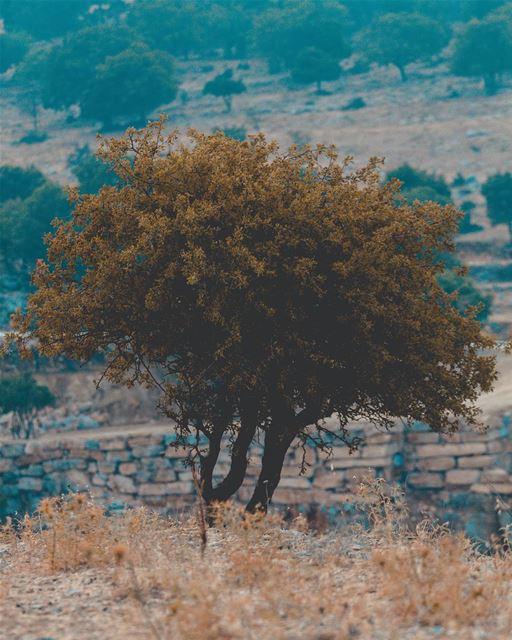 ᴛʜᴇ ᴛʀᴇᴇs ʜᴀᴠᴇ ᴍᴜsɪᴄ ғᴏʀ ᴛʜᴏsᴇ ᴡʜᴏ ʟɪsᴛᴇɴ. (Jezzîne, Al Janub, Lebanon)