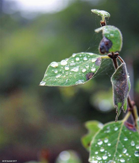 tb closeup leaf water drops macro ehden northlebanon colorful ... (Ehden, Lebanon)