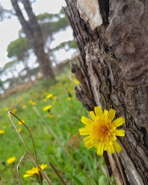 الأحمق يبحث عن السعادة بعيدا، والحكيم يزرعها في اقرب مكان إليه.. 👌 📷 🍃...