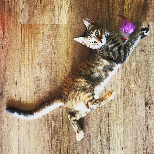 Me On Wednesdays 🐈. cat cats catstagram instagood kitten kitty ... (Beirut, Lebanon)