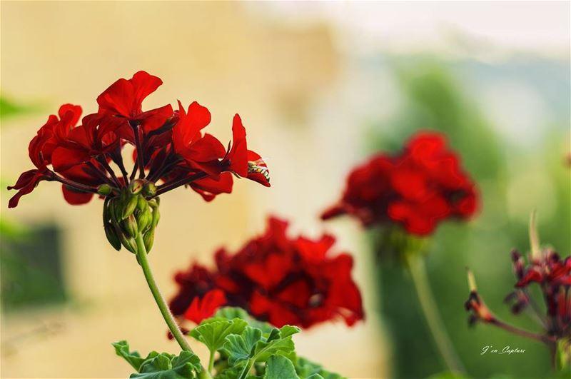 I guess it is a bee.. 🐝••• bee nikkor nikon NikonDSLR NikonDX ... (Balloûné, Mont-Liban, Lebanon)