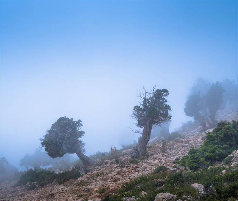 Hiking in the freshness of heavy summer mist lebanon ... (Karm El Meher)