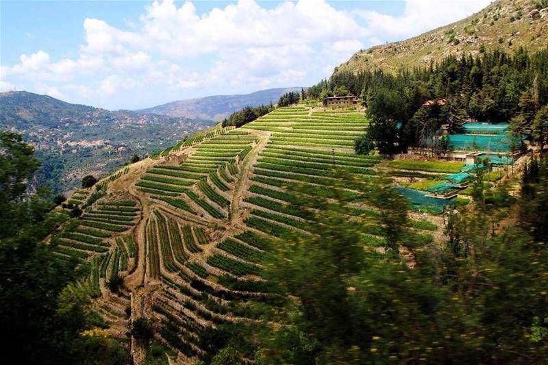 """جبل نيحا (📸""""لبنان 24"""") Lebanon livelovelebanon Lebanese Nature ..."""