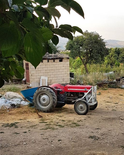 Tractor. tractor grove tree farming fruits vegtables zahle zahleh lebanon... (Zahlé District)