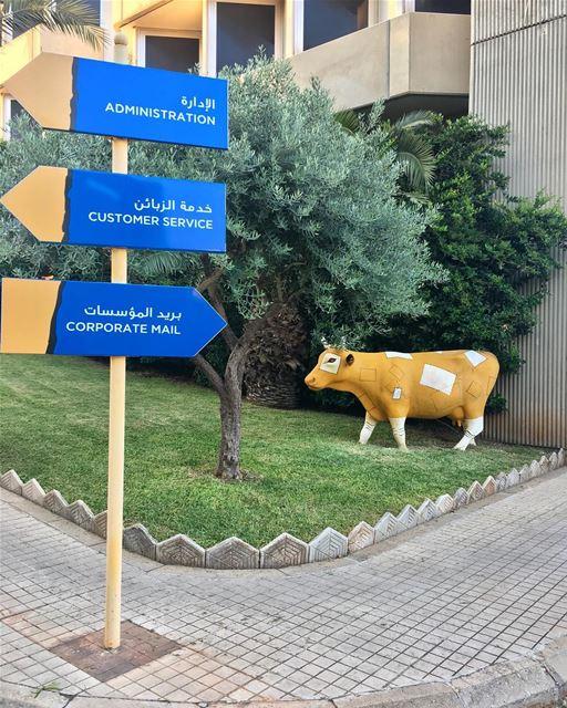 So, have you met our Postal Cow 🐮📮 libanpost postal cows art ... (Beirut–Rafic Hariri International Airport)