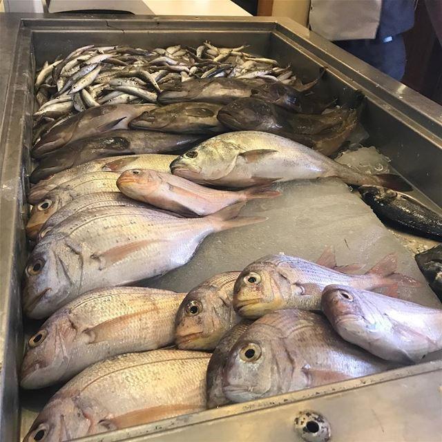 Ready to be fried ? 🐟 🐠🇱🇧 freshfish fish seafood lebanon sour ... (Shawatina Restaurant)