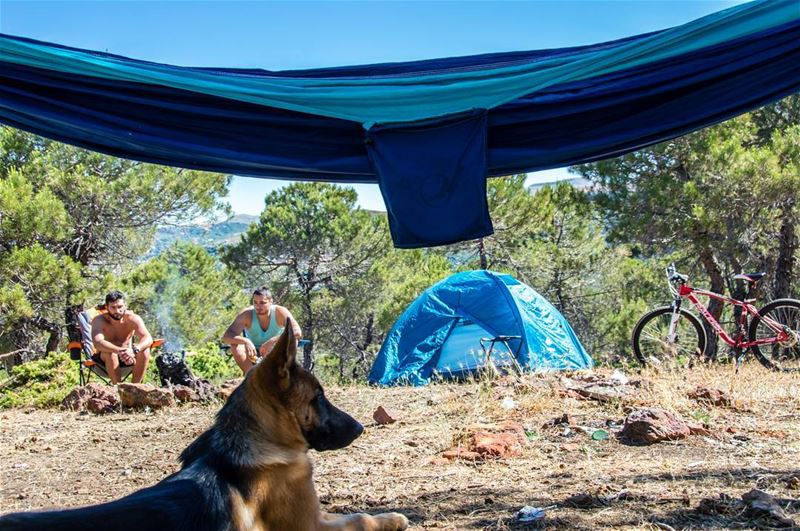 Go outside! 🐶⛺🌳..... dogs hammock tents camping camp bicycle bike... (Marj Biskinta, Mont-Liban, Lebanon)