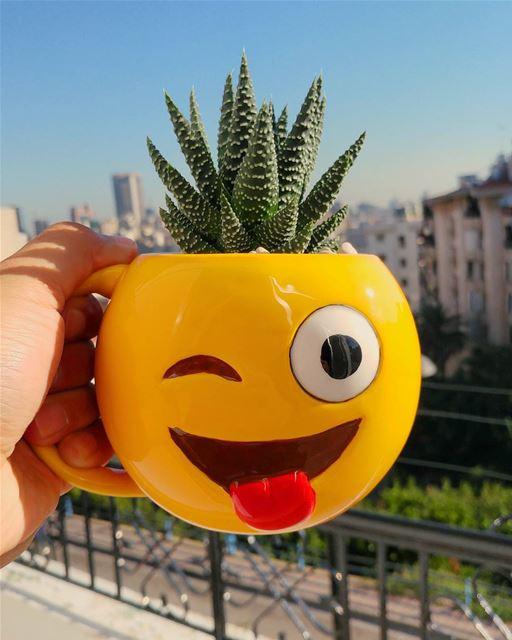 Meet this crazy little creature, a Haworthia (a.k.a Zebra Cactus 🌵) , my...
