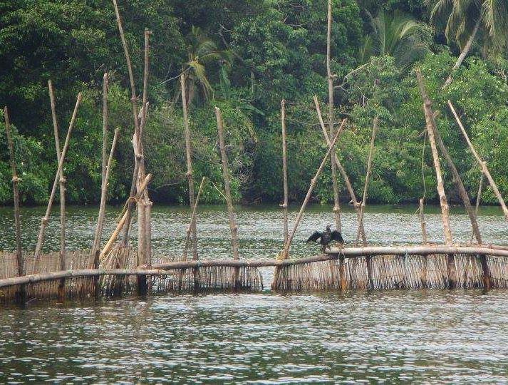 wonderful birds island in srilanka lake wood view walk relax ... (Tissawewa, Sri Lanka)