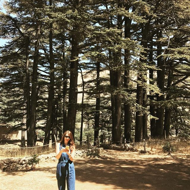 itsfriday  helloweekend  goodmorninglebanon  cedars  green  majestic ... (Cedars of God)