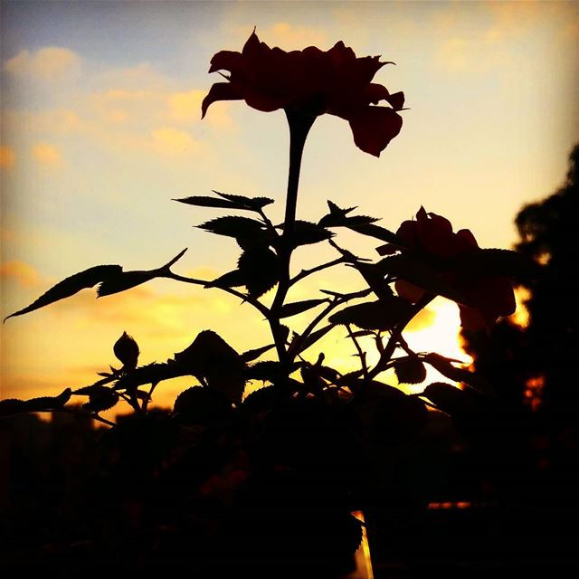 shadows  sunset  summer  flowerlover  homesweethome  me dawn  goodmorning...
