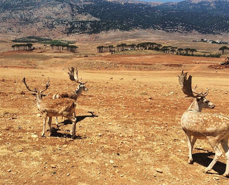 lebanon bekaa throwback instagood wanderlust travelgram ...