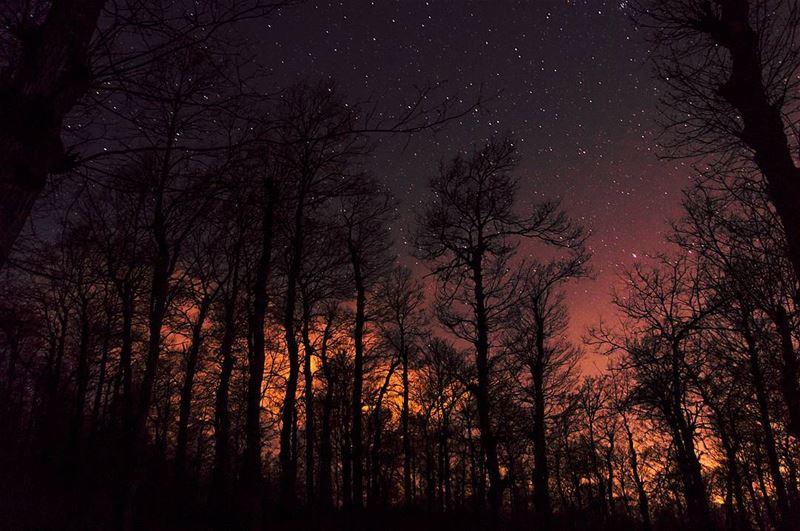 Watch the flames burn auburn on the mountain side🔥.... forest... (Fnaydek)