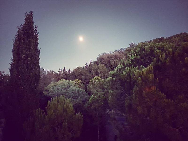 Dreamcatching mypieceofheaven dreamscape moonrise kingdom home ... (Tibnin)
