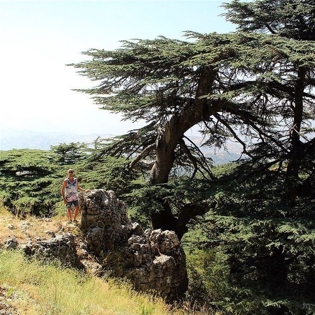 -🔴⚪️🌲⚪️🔴- ... ptk_lebanon amazinglebanon lebanon_hdr lebanon ... (Al Shouf Cedar Nature Reserve)