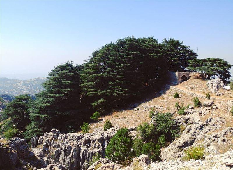 On Sundays, we wear cedars ⛪ 🌲 (Arez Jaj)