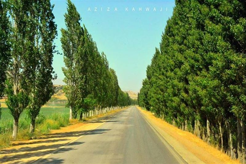 Good Morning everyone 💚From West-Bekaa by @azizakahwaji 😍💚😍💚😍💚 ...
