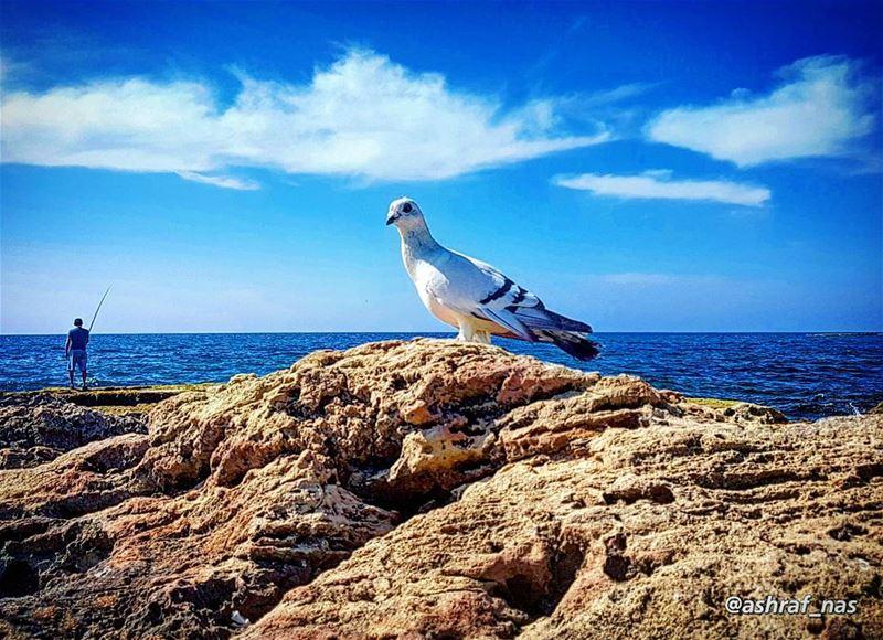 أتعلمُ عيناكِ أني انتظرتُ طويلاًكما انتظرَ الصيفَ طائرْونمتُ كنوم المهاجر (Tyre, Lebanon)