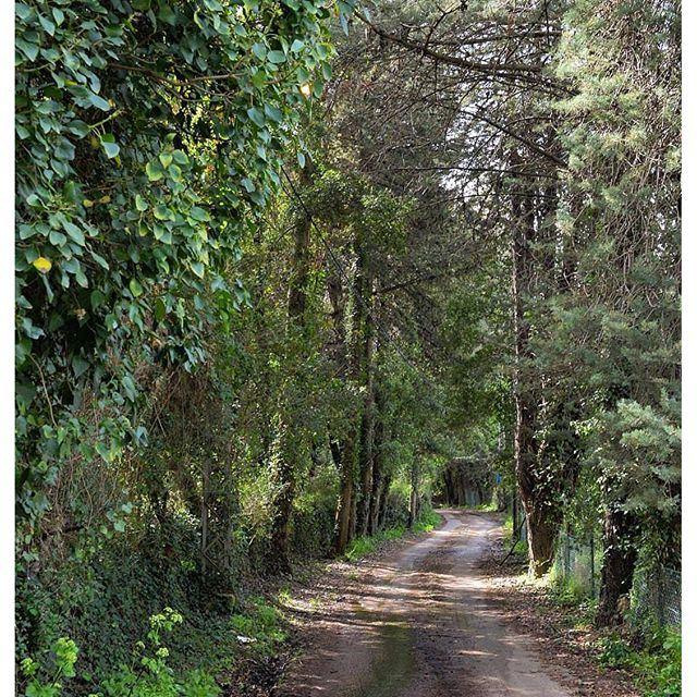 A walk full of mystery by @anthonyatallah @livelovekesserwan (Aramoun Keserwan)