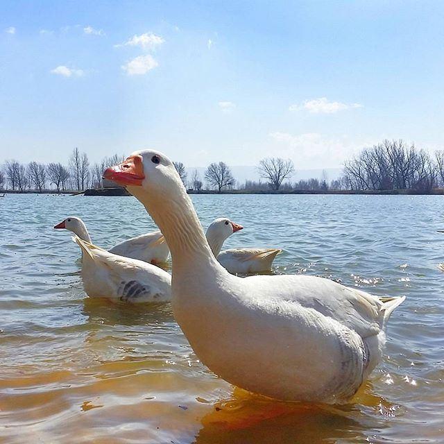 Tanning in the lake @livelovebekaa by @eliesamarani @livelove.pets (Taanayel- Bekaa)